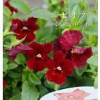 フラワーカーペットローズ 四季咲き 10.5cmプラ角鉢 8種 ハクサン