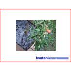 イワタニ 菜園用 たまねぎ用 穴あき黒マルチ 3515 45mm孔 0.02mm×135cm×50m 農業資材 園芸用品 家庭菜園 マルチフィルム ガーデニング