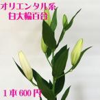 お正月花 パーツ オリエンタル百合(白)  1本  お正月花 松 千両 迎春
