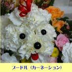 花  純白の生花カーネーションで出来た プードル フラワーギフト