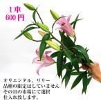 お正月花 パーツ オリエンタル百合(ピンク)  1本  お正月花 松 千両 迎春