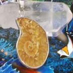アンモナイト 化石 ペンダント ネックレス パワーストーン 天然石--2980
