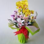 胡蝶蘭S&カトレア 黄 高40cm 開店祝、新築祝、ホテル、応接室、催事装飾、店舗装飾に