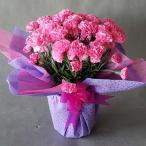 母の日、カーネーション(ピンク)(高さ35cm×巾25cm)、光触媒、造花