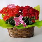 母の日、カーネーション鉢2個入セット(造花) 赤&オレンジ (高さ25cm巾30cm)、
