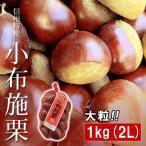 小布施栗 おぶせ くり 大粒 2Lサイズ 約1kg 長野県小布施町産 長野県産 無燻蒸 生栗