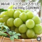 お中元 フルーツ ぶどう シャインマスカット 岡山県産 約700g×1房 化粧箱入り 送料無料   葡萄 くだもの 果物 ギフト 贈り物 御中元 暑中 残暑 見舞い