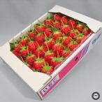 いちご フルーツ ギフト 女峰 にょほう ベリーベリー 約1kg 香川県産 お祝い 内祝い 贈り物 プレゼント 苺 詰め合わせ 1キロ 箱詰め ご贈答 品