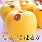 りんご 詰め合わせ はるか 約2kg 5〜6玉入り 岩手県産 送料無料 生産者限定 フルーツ ギフト くだもの 果物 林檎