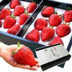 お歳暮 ギフト フルーツ 苺八景 いちごはっけい 滋賀県野洲市産 近江特産 紅ほっぺ 特大サイズ 16粒入り
