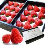 お歳暮 ギフト フルーツ 苺八景 いちごはっけい 滋賀県野洲市産 近江特産 紅ほっぺ 3Lサイズ 24粒入り