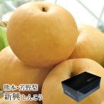新興梨 しんこうなし 熊本県産 約2.3kg 5〜7玉入り 化粧箱入り 送料無料 芳野の日本梨
