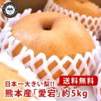 愛宕梨 あたごなし 熊本県産 約5kg 5〜9玉入り 送料無料 芳野の日本梨 日本一大きい梨