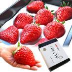 お歳暮 ギフト フルーツ 苺八景 いちごはっけい 滋賀県野洲市産 近江特産 紅ほっぺ 特大サイズ 8粒入り