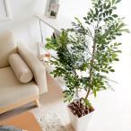 光触媒 観葉植物 トネリコ 120cm