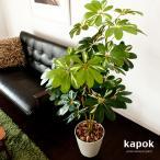 光触媒 観葉植物 カポック(シェフレラ) 120cm インテリア 消臭 防菌 光触媒人工植物
