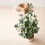 光触媒 観葉植物 オリーブ 90cm 消臭 防菌 光触媒人工植物