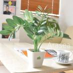 観葉植物 アラセア 光触媒人工観葉植物