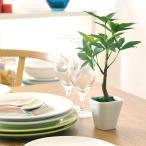 光触媒 観葉植物 パキラ ミニ 卓上 人工観葉植物 インテリア おしゃれ かわいい 人気 消臭 抗菌 防汚 卓上観葉植物