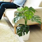 観葉植物 モンステラ 光触媒 人工観葉植物