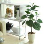 観葉植物 V-CAT 光触媒 人工植物 消臭 防菌 ウンベラータ 80cm 光触媒人工植物