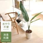 光触媒 観葉植物 トラベラーズパーム 120cm 消臭 防菌 おしゃれ 旅人の木 お手入れ不要 光触媒人工植物