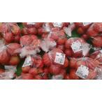 大玉トマト  1kg