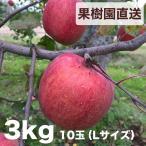 樹上完熟【会津産】ふじリンゴ 3kg 10玉(Lサイズ)
