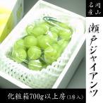 送料無料 岡山県産 瀬戸ジャイアンツ 化粧箱 700g以上房 贈り物や季節のご挨拶に  お供え