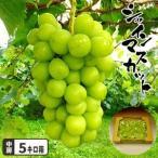 TVで紹介されました 岡山県産 皮ごと食べられて種もない送料無料 シャインマスカットたっぷり2キロ箱