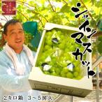 物部農園 シャインマスカット 2キロ箱 3〜5房入 岡山県産 天空の郷平川より直送 送料無料