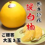 お歳暮に 熊本産送料無料 ご贈答用晩白柚(ばんぺいゆ)赤秀大玉3玉