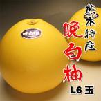 お歳暮に 熊本産送料無料 晩白柚(ばんぺいゆ)L6玉約10kg 24時間セール中
