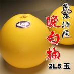 お歳暮に 熊本産送料無料 晩白柚(ばんぺいゆ)2L5玉約10kg