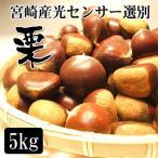 光センサー選別 最高級品送料無料 宮崎産の栗5kg