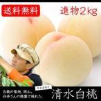 生産者限定商品 臼井桃園の「清水白桃」進物 清水白桃 2kg 期間限定ポイント5倍