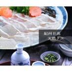 【活魚】本場紀州の最高級天然クエ鍋セット【4〜5人前】【送料無料】