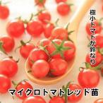 マイクロトマト レッド 苗 9cm茶ポット