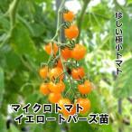 マイクロトマト イエロートパーズ苗 9cm白ポット