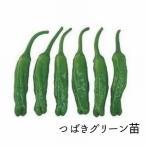 天ぷらや炒め物に欠かせないシシトウ。