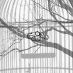 cage. 【Wonderland】