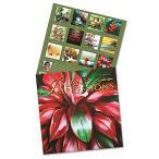 カレンダー 2021 ハワイアンカレンダー ハワイアーティストデザイン 壁掛け ハワイアンデザイン フィリップサバドアート 12か月