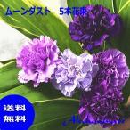サントリー ムーンダスト花束 青いカーネーション5本(ムーンダスト5)