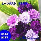 サントリー ムーンダスト花束8本 青いカーネーション(ムーンダスト8)