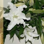 お供え花束 お悔やみのお花  カサブランカ(ユリ)の花束 お悔やみ お供え