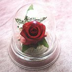 ホワイトデー特別価格!プリザーブドフラワー ドームに入った赤いバラ