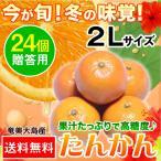 奄美大島 たんかん タンカン 贈答用 2Lサイズ 24個入り