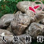 大分県産 大葉椎茸[90g]