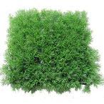 人工芝 グリーングラスマット (ライトグリーン) (1枚)(造花 人工草 DIY 壁面装飾 フェイクグリーン)(屋外使用可)