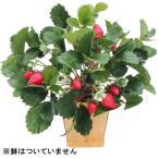 イチゴブッシュ(造花 人工観葉植物 ミニ フェイクグリーン 店舗装飾 ストロベリー)(本体のみ)